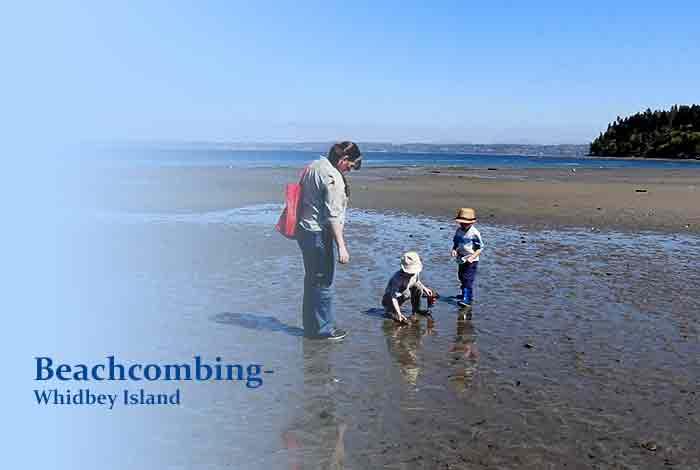 Beachcombing – Whidbey Island