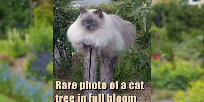 A Cat Tree? Really