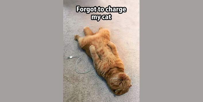 The Discharged Cat